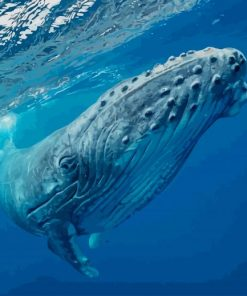 Humpback Whale paint by numbers