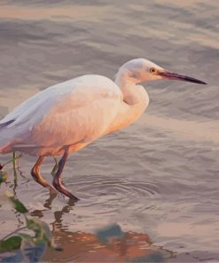 Snowy Egret paint by number
