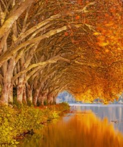 Autumn Trees Near Lake paint by number