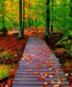 Beautiful Autumn Nature paint by number