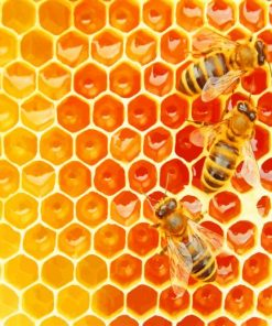Bees in The Hive paint by numbers