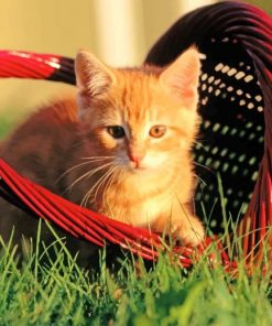 Cat In a Red Basket paint by numbers