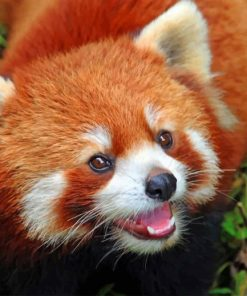 Baby Red Panda paint by numbers