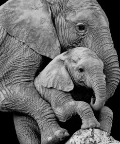 Mum Elephant and Her Baby paint by numbers
