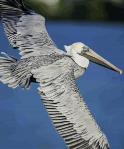 Pelican Flying Wings paint by numbers