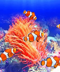 Orange Clownfish paint by numbers