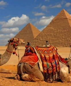 Camels And Pyramids paint by numbers