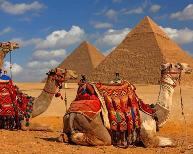Colorful Paints By Number Pyramids DIY Kit Unique Design Camels Art Design Decor DIY Desert Paint by Number Kit Acrylic Palms Painting Home Decor