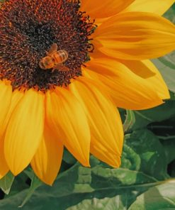 Honey Bee Perched On Yellow Sunflower painting by numbers