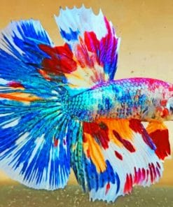 Colorful Betta Fish paint by numbers