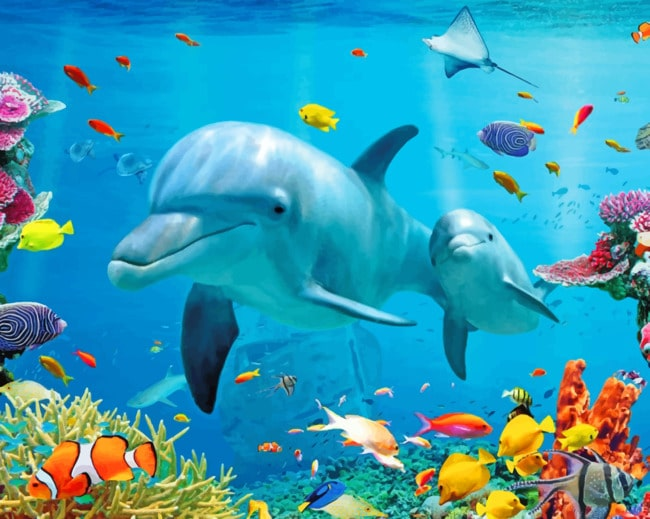 Dolphins And Tropical Fishes Under Sea paint by numbers