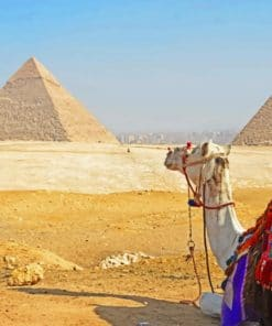 Egypt Camel paint by numbers