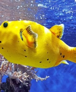 Yellow Fish paint by numbers