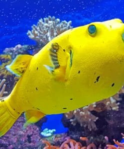 Yellow Tropical Fish paint by numbers