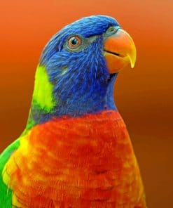 Blue And Orange Parrot paint By Numbers