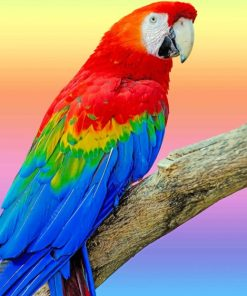 Colorful Parrot paint by numbers