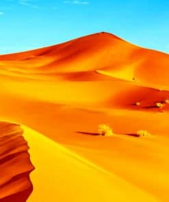 Golden Sand Paint By Numbers