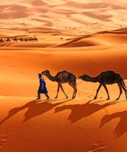 Camels In Sahara paint by numbers