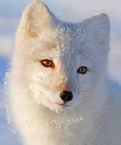 White Fox paint By Numbers