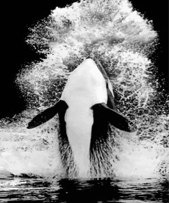 Monochrome Orca paint by numbers