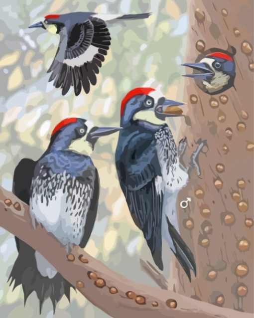 Acorn Woodpecker Bird Family paint by numbers