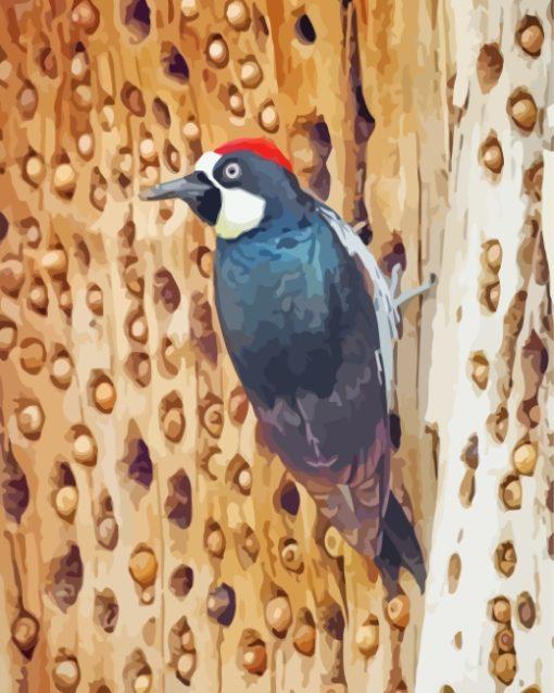 Acorn Woodpecker Bird paint by numbers